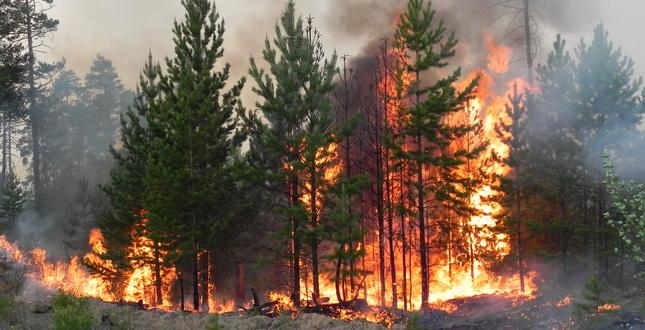 На гасіння пожежі у Голопристанському районі задіяно 32 одиниці техніки та 108 чоловік: площа пожежі становить 10 га